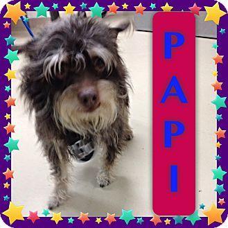 Pugshire Puggle Puggle Yorkie Mix Pugshire Mix Dog Breed Info Design ...