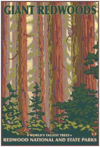 Giant Redwoods, Redwood National Park, California Posters at AllPosters.com