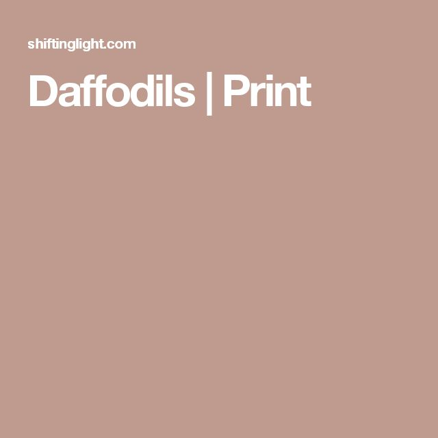 Daffodils | Print