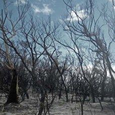 Burnt trees on Fraser Island #Australia. Image by Lucy Munday #photography. See more at www.lucymunday.com