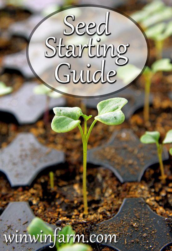 Starting Seeds Indoors | winwinfarm.com