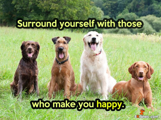 Surround yourself with those who make you happy! #4Knines #BigDogs #Dogs #Pets #ilovedogs #FurKids #Happiness: