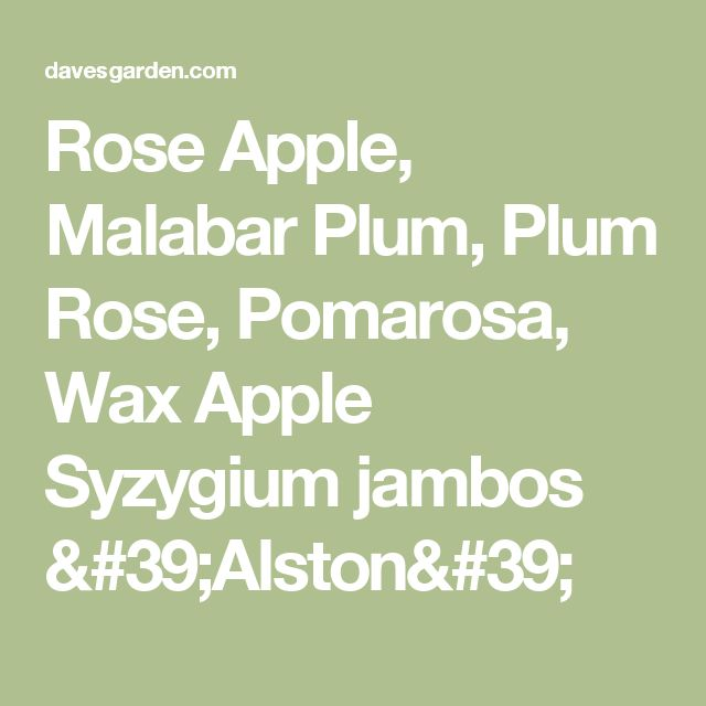 Rose Apple, Malabar Plum, Plum Rose, Pomarosa, Wax Apple  Syzygium jambos 'Alston'