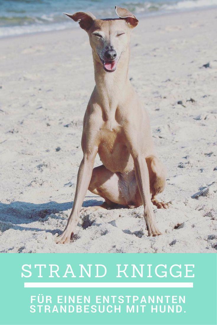 Strand-Knigge für eine entspannten Strandbesuch mit Hund.