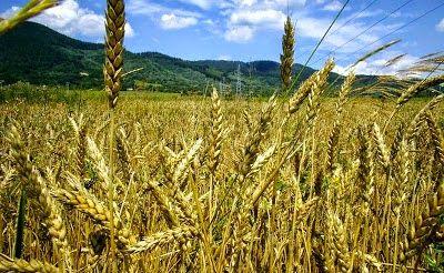 """ΔΗΜΗΤΡΗΣ ΚΥΠΡΙΩΤΗΣ: """"Η Ελλάδα δεν έχει επαρκή παραγωγή τροφίμων"""". Ας δ..."""