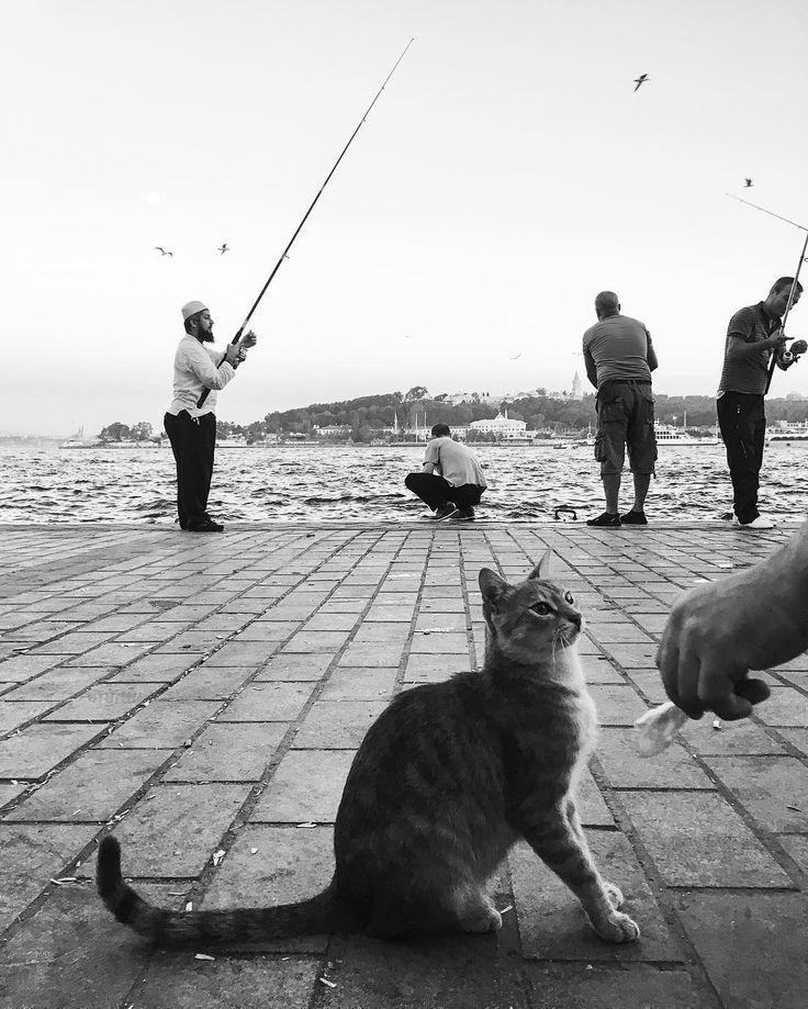@mustafaseven #Istanbul #StoryOfIstanbul #CatsOfIstanbul