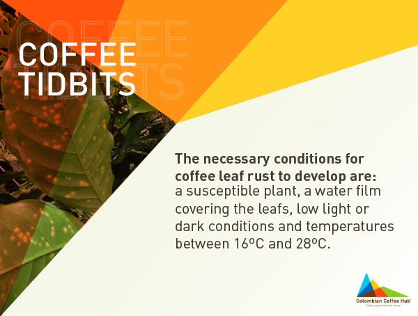 There's ton of fresh brewed content about coffee at www.colombiancoffeehub.com