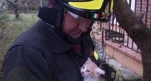 Image result for vigili del fuoco gatto