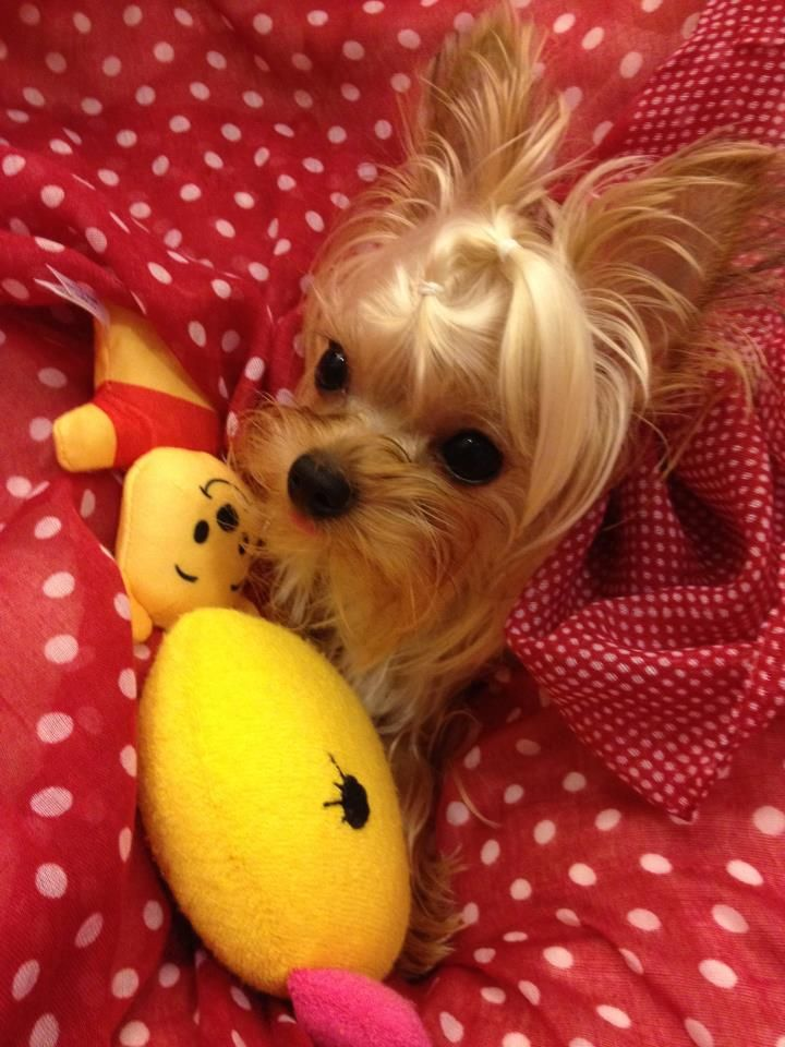 Puppuru is playing with Winnie and Duck Duck.