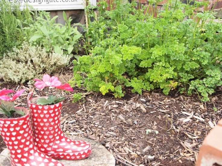 Welly boots and flowers in our garden