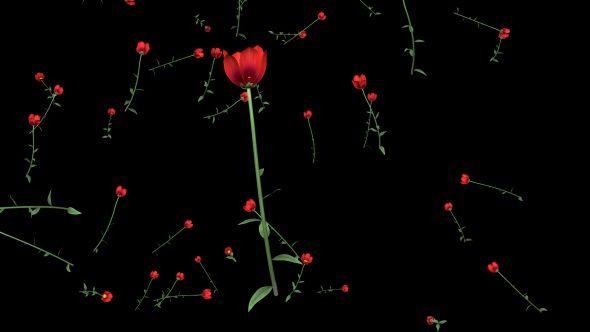 Rain of Poppies