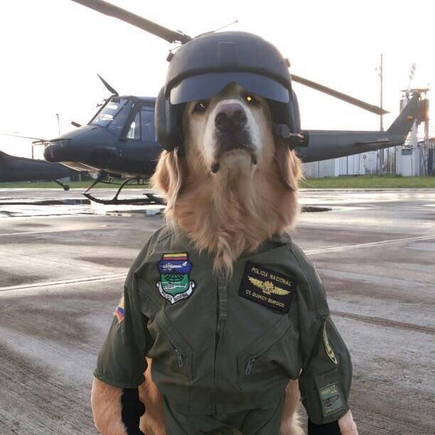 Funny # dog soldier # dog pilot # helicopter | Ain't No ...
