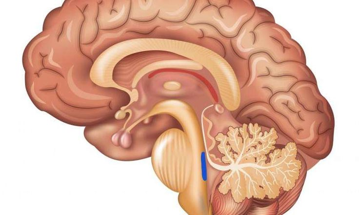 Researchers highlight brain region, locus coeruleus, as 'ground zero' of Alzheimer's disease