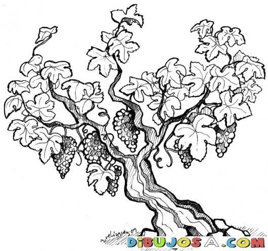 Vinedo Dibujo De Arbol De Uvas Para Pintar Y Colorear | COLOREAR DIBUJOS VARIOS…