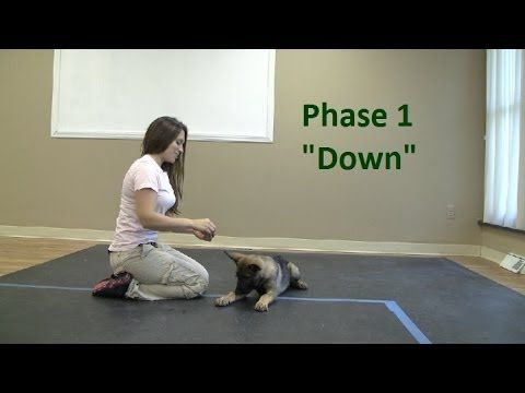 How to Train a dog to lay Down (K9-1.com) - YouTube Read more in http://natureandhealth.net/