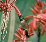 I love hummingbirds. ♥