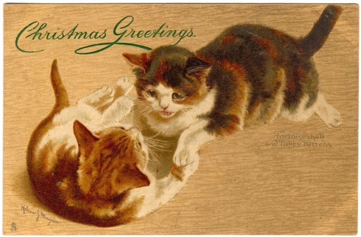 POSTCARD CATS TORTOISESHELL & TABBY KITTENS SIGNED HELENA MAGUIRE in Collectibles | eBay