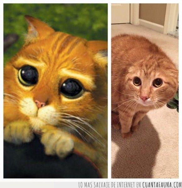 Las 25 mejores ideas sobre fotos de gatitos tiernos en for Ahuyentar gatos de mi jardin