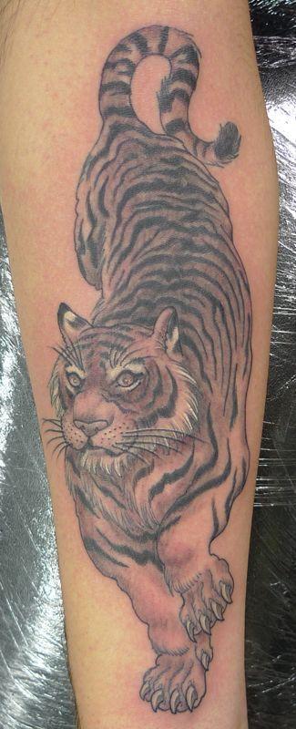 Tiger forearm interesting tattoos pinterest tigers for Tiger forearm tattoo