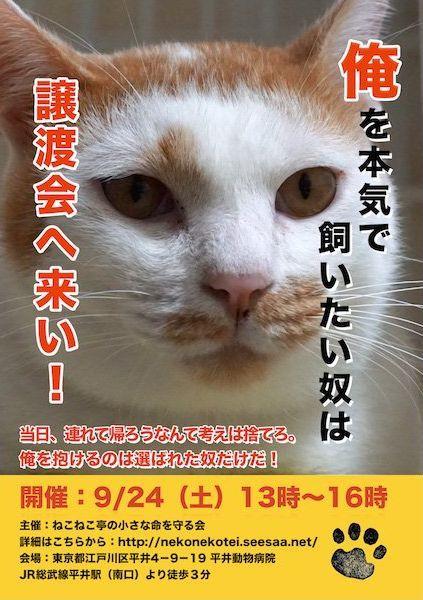 「思わず吹き出した」・「これぐらい強気で良い」猫の譲渡会のポスターがインパクト抜群だった | COROBUZZ