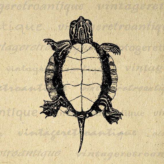 Printable Digital Tortoise Turtle Graphic by VintageRetroAntique