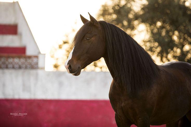 Eine Reise bei der man nur gewinnen konnte – Monika Bogner Photography – Pferdefotografie und Hundefotografie in Bayern und ganz Deutschland