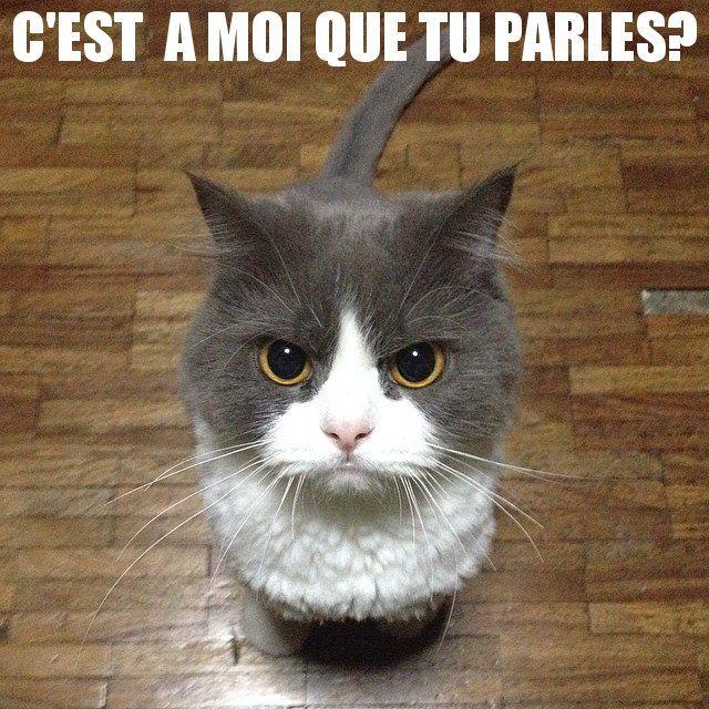 C'est à moi que tu parles?