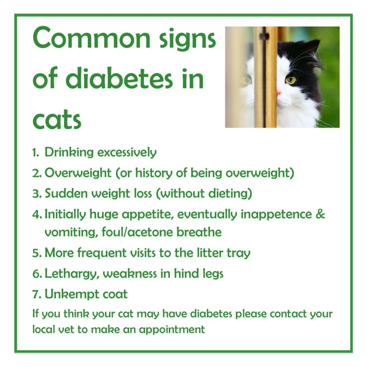 Food for Diabetic Cats: Understanding food can save your cat!