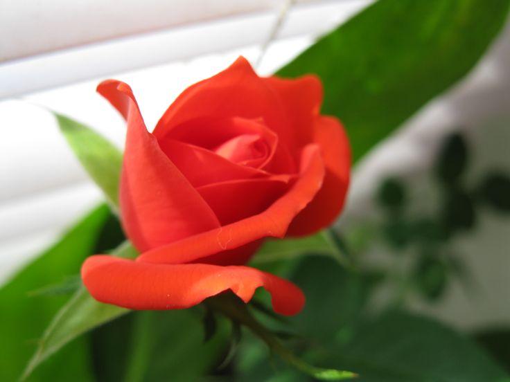 Eksperymentuj z tworzeniem kompozycji florystycznych bez dodatkowych kosztów www.florysta3d.pl