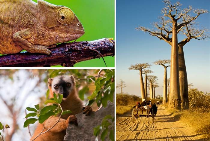 6 Cool Facts about #Madagascar… authentic Island, a world apart