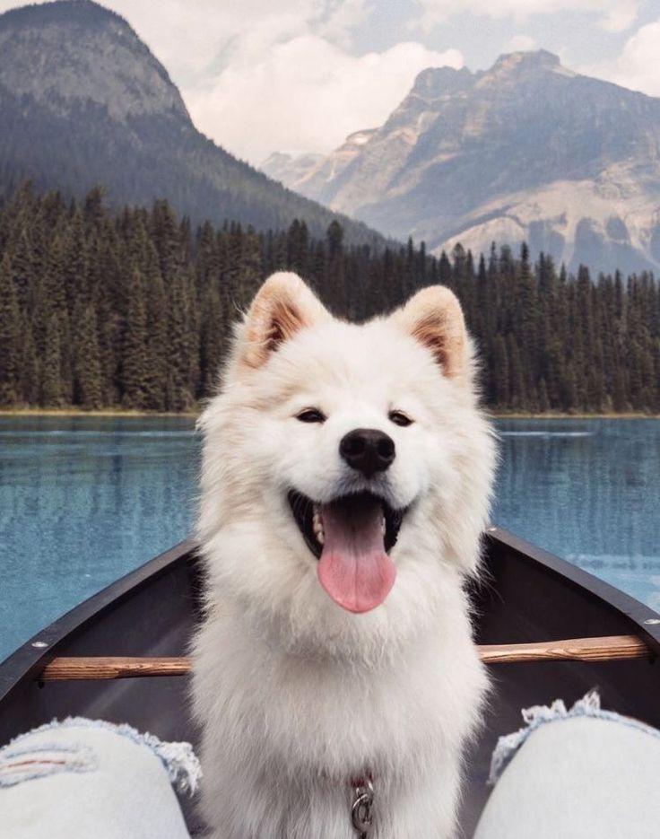 Urlaub mit dem Hund. #buddyandbello #buddybello #dog #dogs