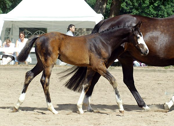 Dark Bay Horse With Blaze 17 Best images about W...