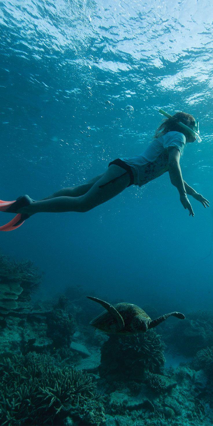 Snorkelling with turtles around Lady Elliot Island - by Sean Scott & @visitqueensland