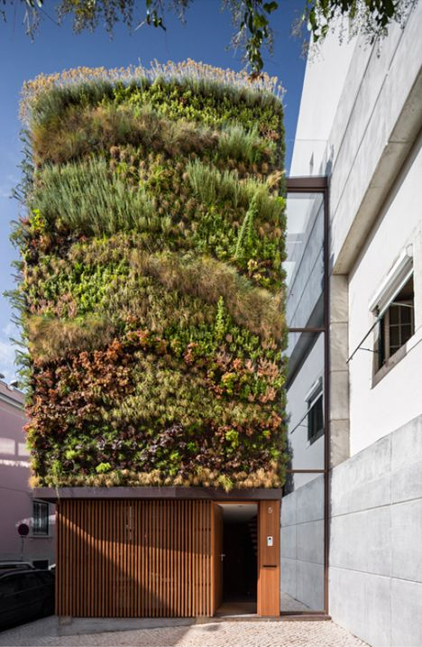 Living exterior wall in Lisbon, Portugal.