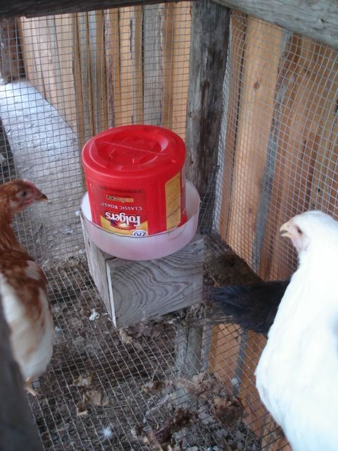 Diy Chicken Water Chicken Waterer Automatic Chicken