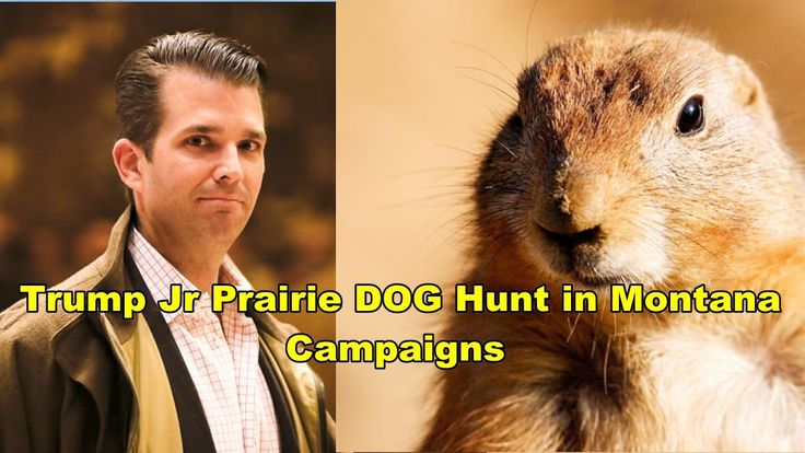 Trump Jr Prairie DOG Hunt in Montana Campaigns | Global News 24