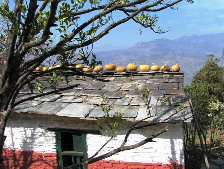 A beautiful and authentic slate-roofed house with pumpkin storing on the roof. A clever way in Myagdi Annapurna trek - Nepal - http://www.travelmoodz.com/en/travel-professional/vimal-thapa