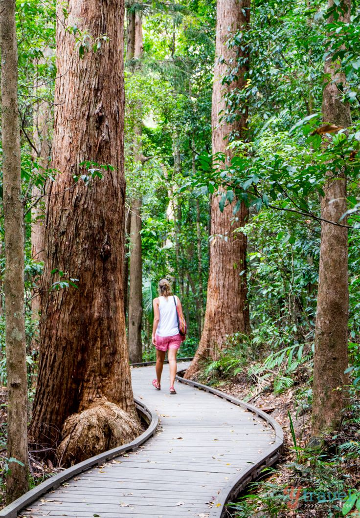Go hiking in the Sunshine Coast Hinterland, Australia. Visit our blog for tips on what to see & do.