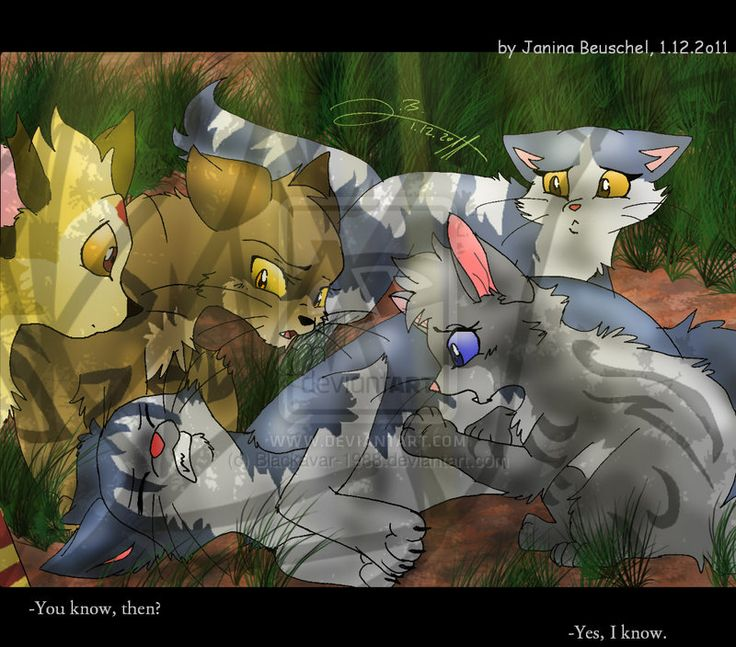 858 Best Warrior Cats Images On Pinterest