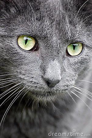 animals close up - Pesquisa do Google