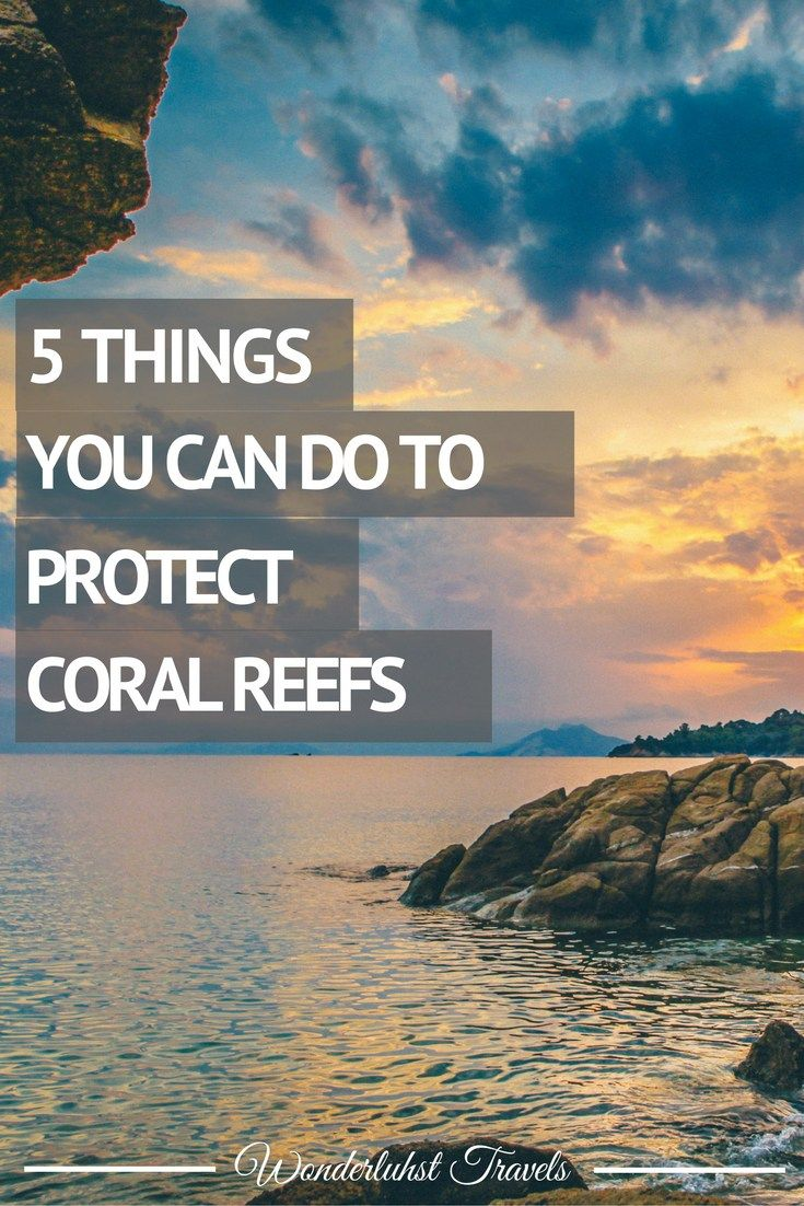 Coral Reefs are just one of those wonders in the world. But did you know that…