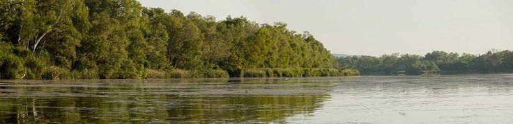8.3.1 Ecosystems at Risk - Freshwater Wetlands -  Managing wetlands, Ramsar Convention, Wetlands programs etc.