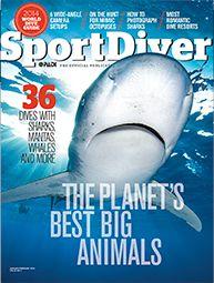 Contact Us   Sport Diver