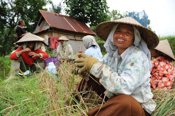 Indonesialaisesta kukkulakaupungista löydät torahampaisia noitia, demonien lepyttelylahjoja ja riisipeltoja vartioivan tulivuoren.  http://www.exploras.net/uudet-tekstit#/balin-maagisin-paikka-on-ubud/