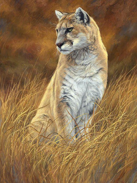 Mountain Lion Poster By Lucie Bilodeau 193 Llatok Ii