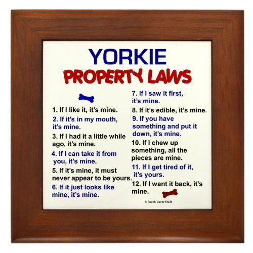 Yorkie Property Laws 3 Framed Tile by CafePress by CafePress, http://www.amazon.com/dp/B009P9P6WY/ref=cm_sw_r_pi_dp_FtWkrb0MX6YEF