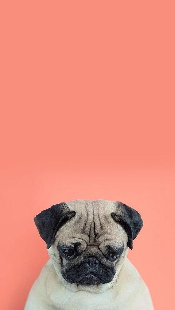 Pin Em Aesthetic Wall Cool black dog wallpaper for iphone