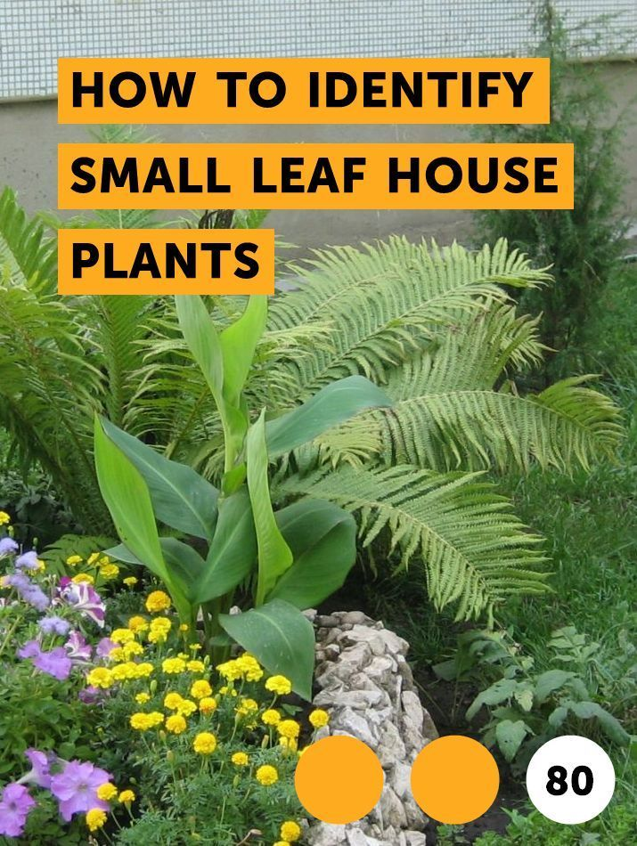 How to Identify Small Leaf House Plants. Any plant that ... House Identify Plant By Leaf on ash trees identification by leaf, vegetable identification by leaf, house plant with heart shaped leaves, vine identification by leaf, identify a plant leaf, house plant identification,