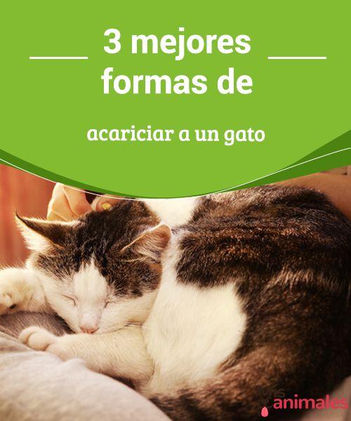 3 mejores formas de acariciar a un gato Te dejamos algunos consejos para que acariciar a un gato sea una actividad gratificante tanto para ti como para el animal. #Consejos #Acariciar #Gato #actividad