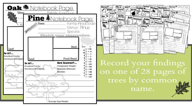 Tree Notebook Pages by Stephanie Harrington | Harrington harmonies